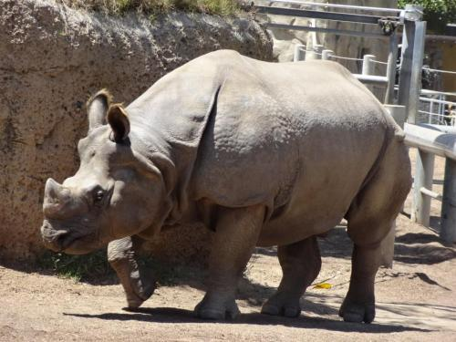 65295-featurerhino7.jpg