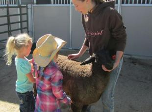 "Sophis Ruedy introduces her sheep ""Dutch"" to her young audience"