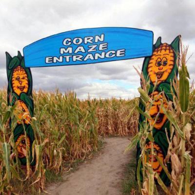 62538-corn.jpg
