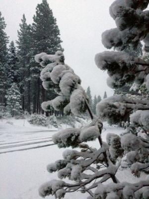 62645-snow_on_trees_10.22.12.jpg