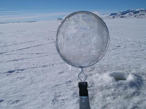 64023-ice5.jpg