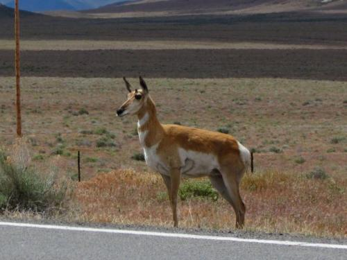 64792-feature_1_antelope1.jpg
