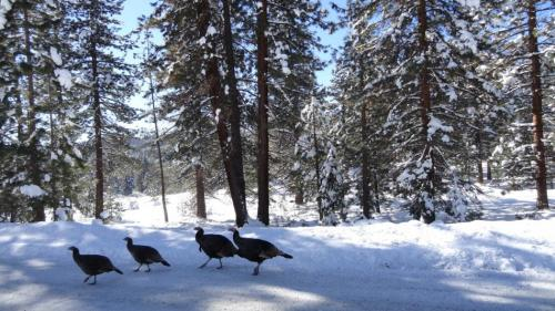 64792-feature_5_turkeys1.jpg