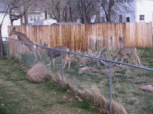 70086-fence2.jpg