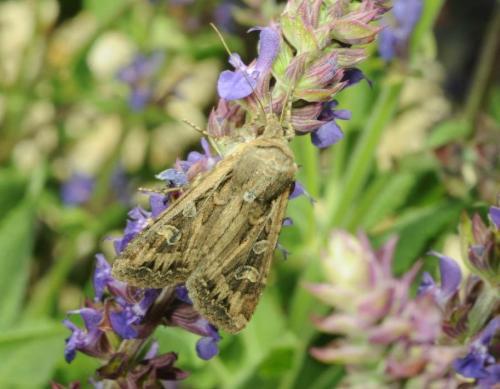 71163-moth.jpeg