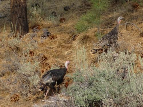 72004-feature_09_turkeys.jpg