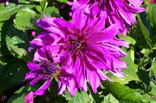 72088-feature_07_purple_flower.jpg