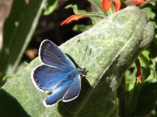72088-feature_09_butterfly.jpg