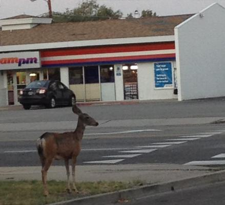 72545-safety_deer_2.jpg